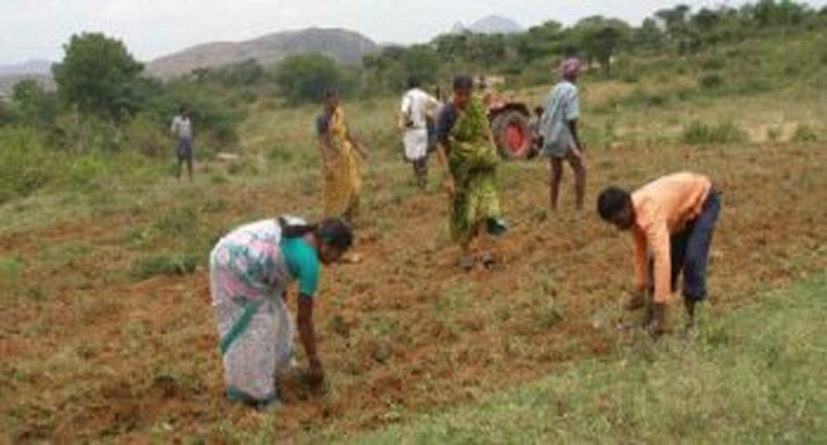 Funds crunch hits land distribution to Dalits in Mahbubnagar