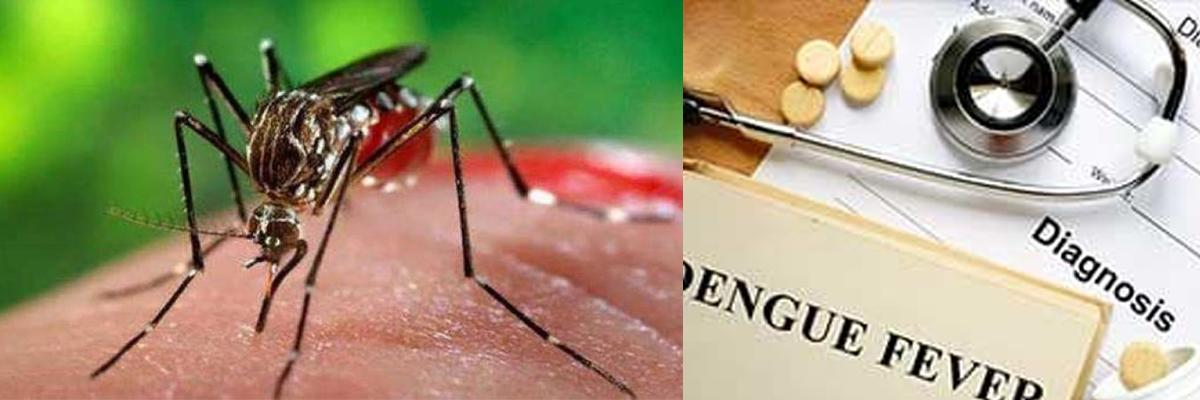 260 new dengue cases, add up to 2,406