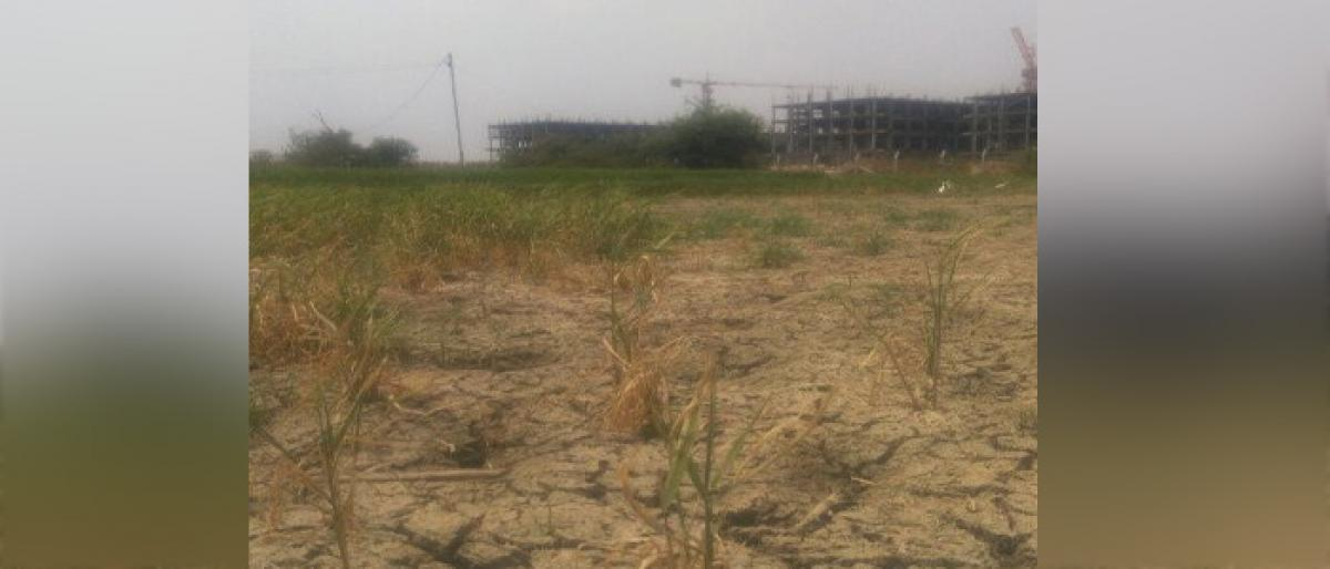 Industries suck groundwater Paddy withering away in Telangana
