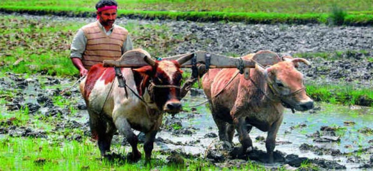 Tenant farmers toil as landlords get Rythu Bandhu scheme benefits