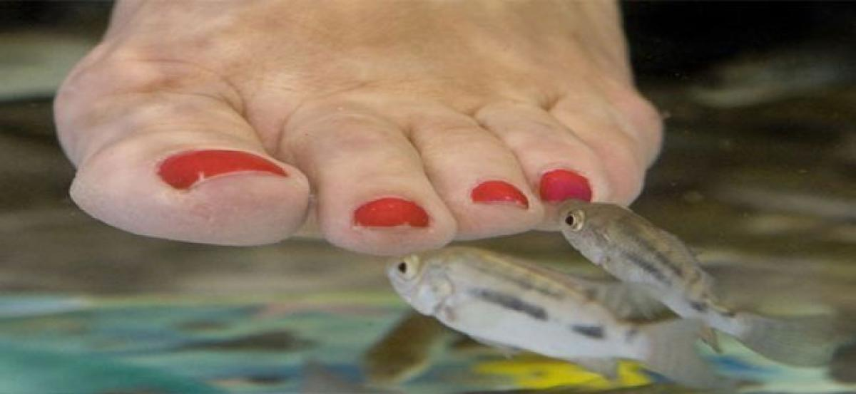 Fish pedicure now in city