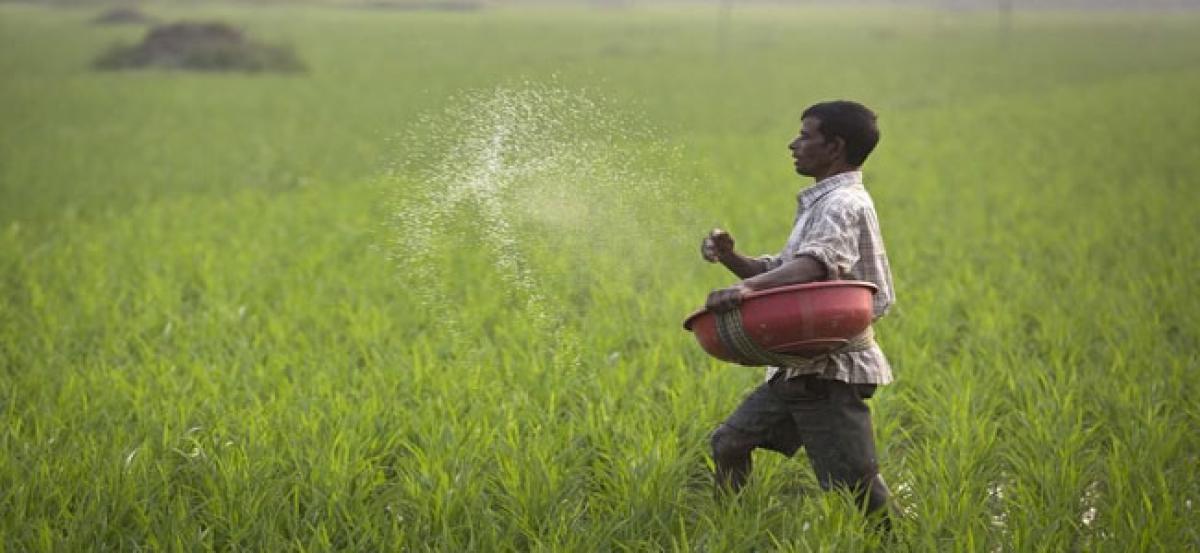 Showers raise hopes of farmers