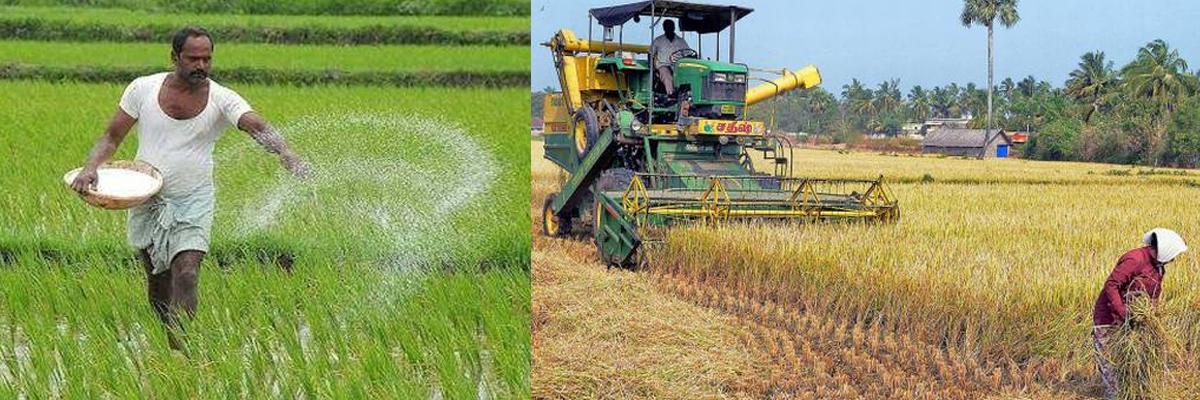 Middlemen exploit paddy farmers in Srikakulam