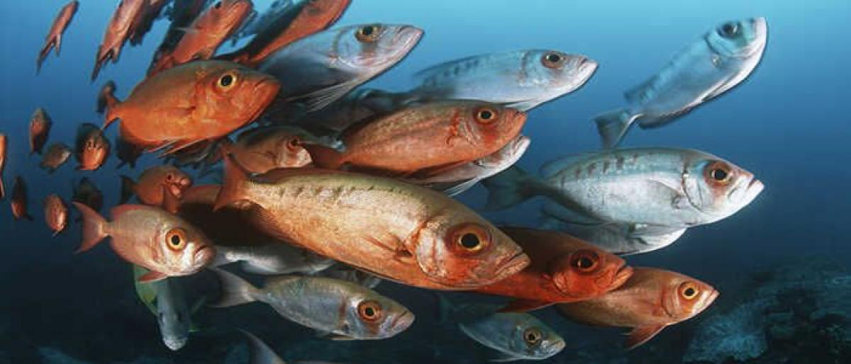 Earliest know flesh-eating fish identified