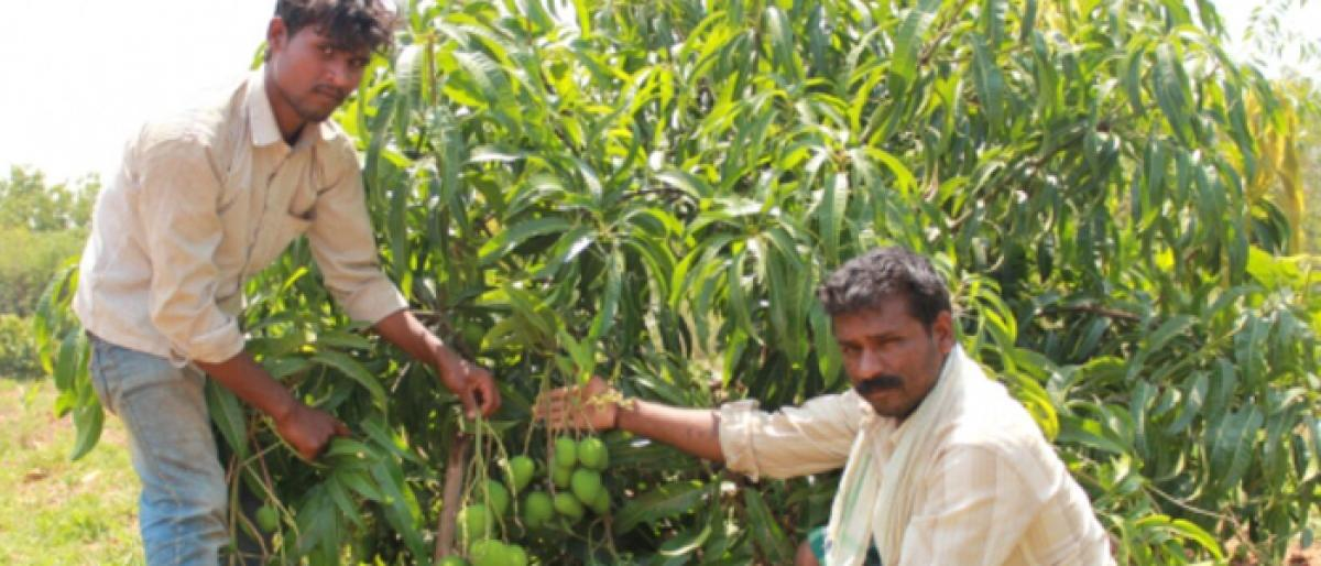 Awareness programme on mango farming today