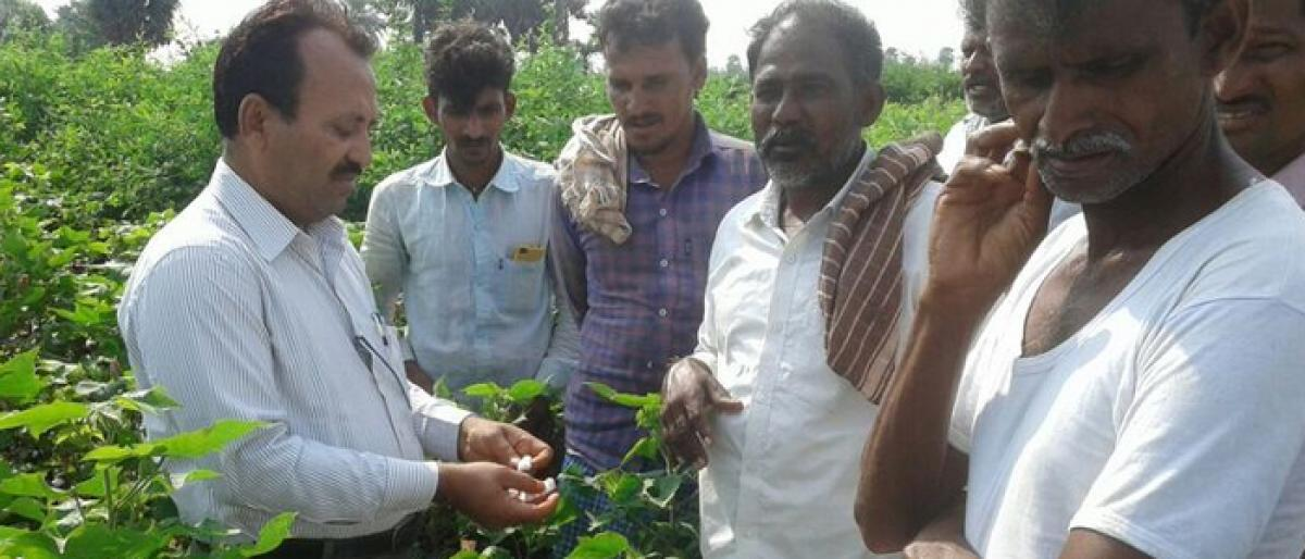 Gadwal farmers told to insure their crops