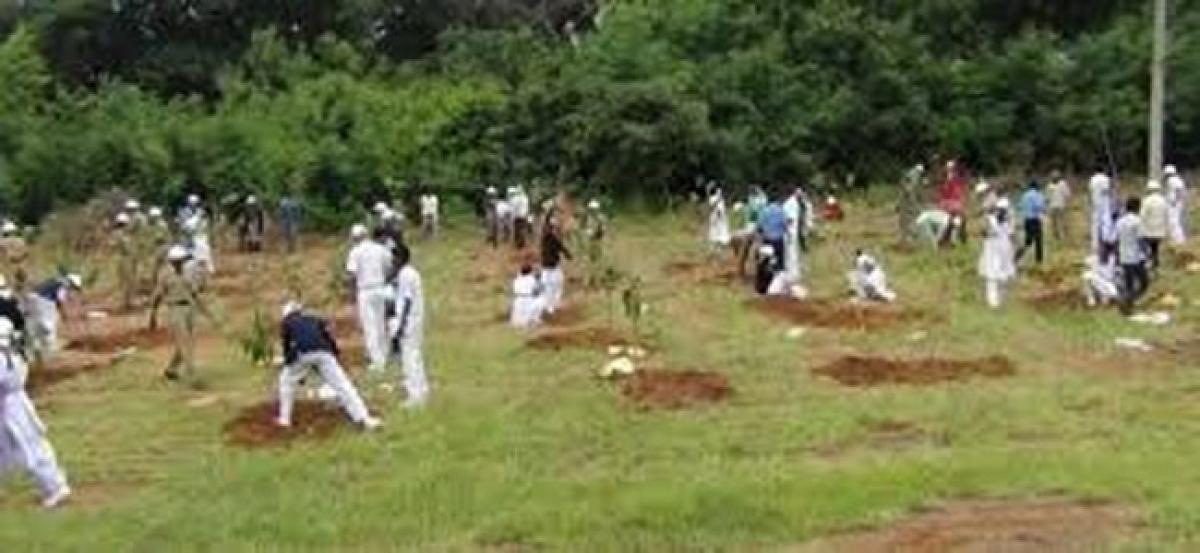 Digging pits for Haritha Haram begins