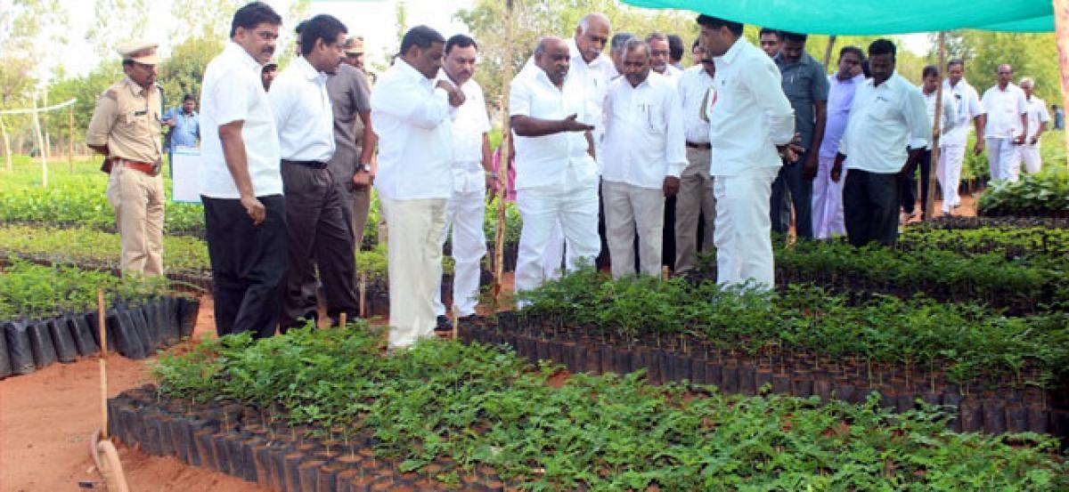Haritha Haram: One lakh saplings to be planted in Gajwel