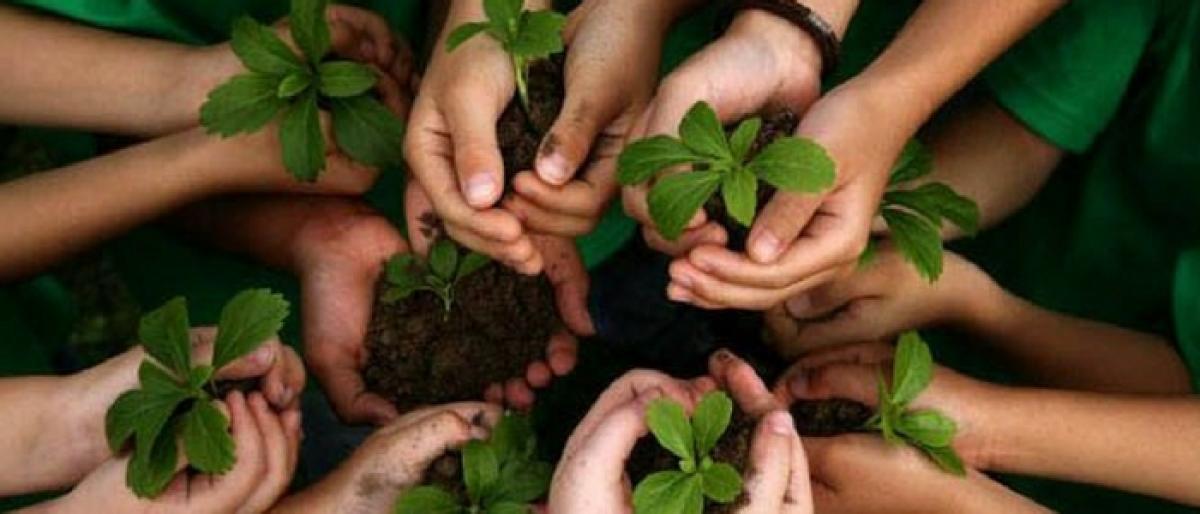 More than 2 L saplings planted
