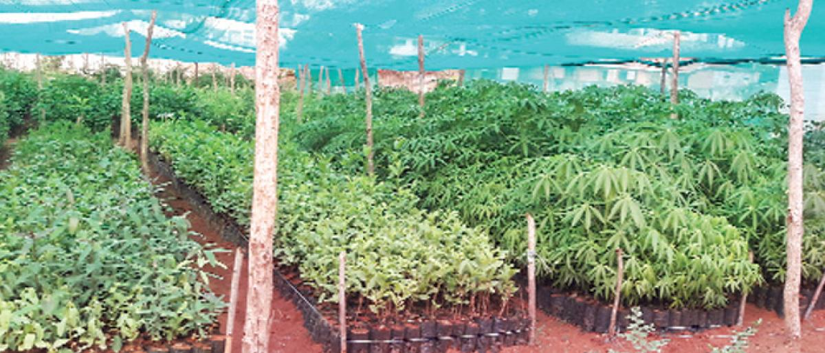 One house, one plant in Haritha Haram in Kothagudem