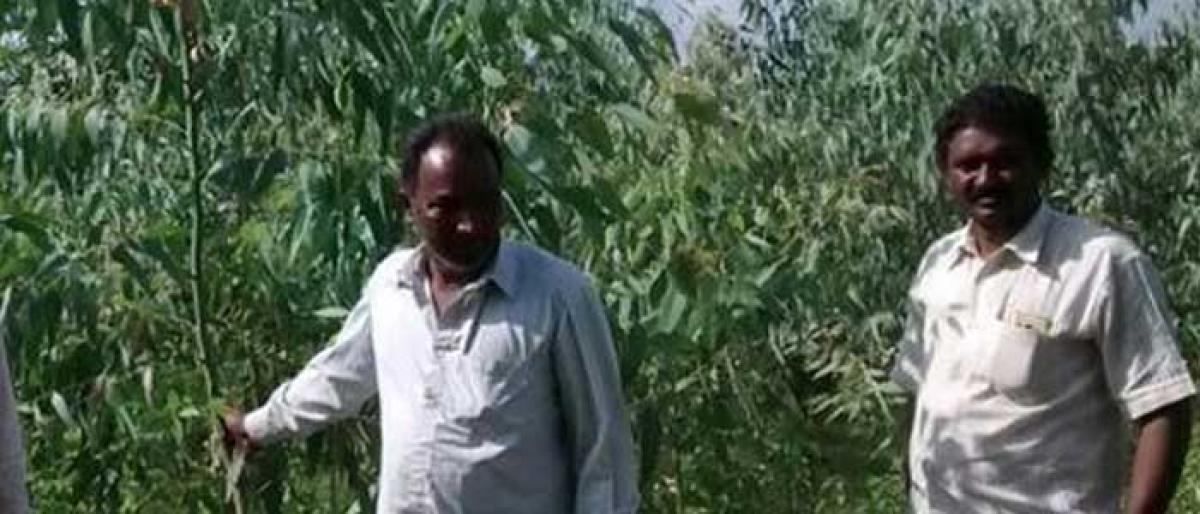 Shared efforts make Kannaraopet a model village