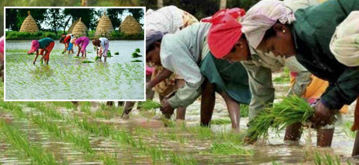 Monsoon covers entire Maha, brings relief to farmers
