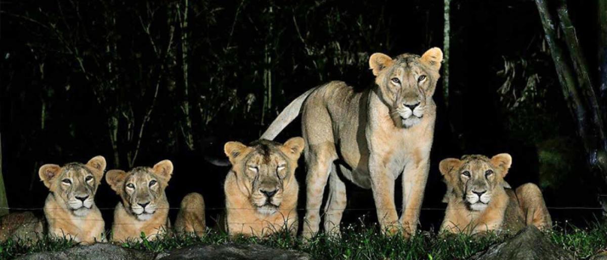 Move afoot on Hyderabad night safari park
