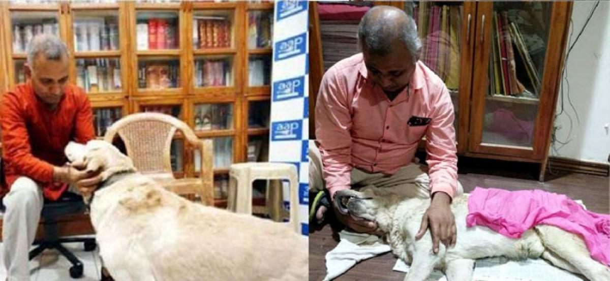 Somnath Bhartis pet Labrador Don who made headlines for biting his wife, dies
