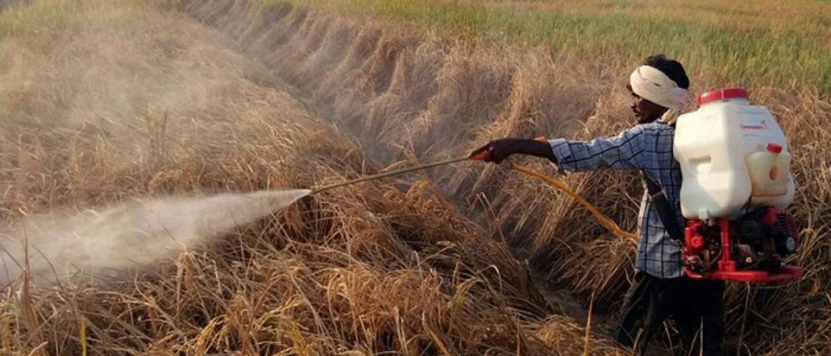 Paddy in 10k acres damaged