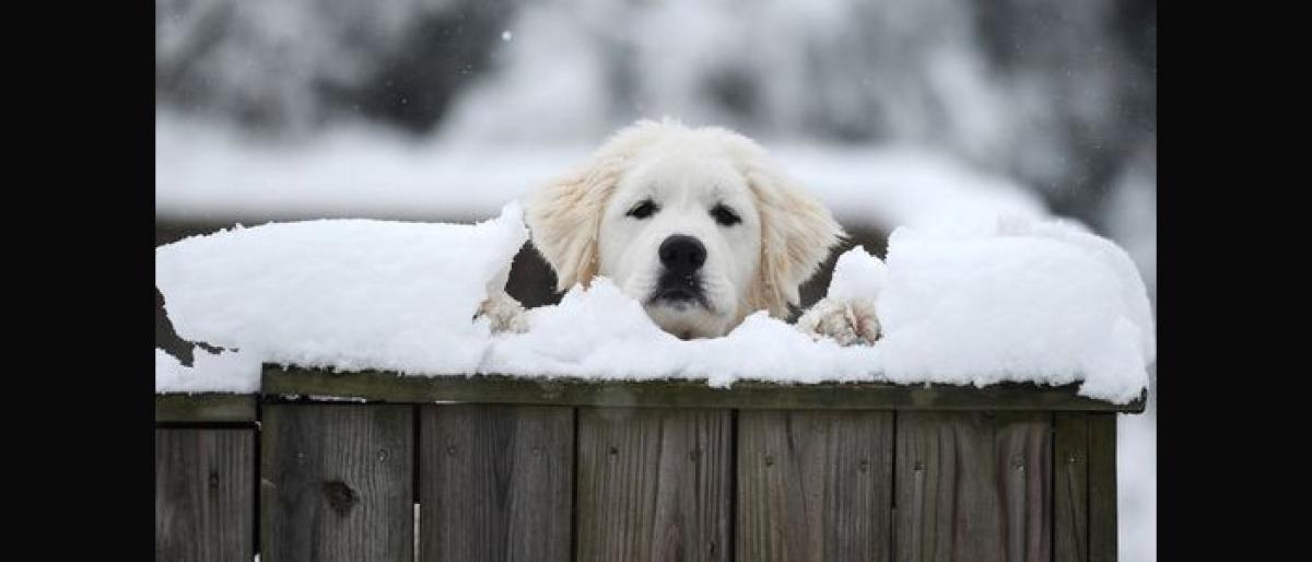 Keep your furry friend warm