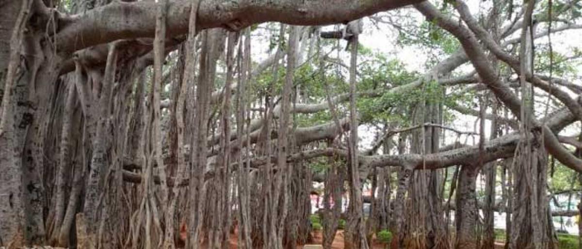 Mahbubnagar mulls common fee at tourist centres