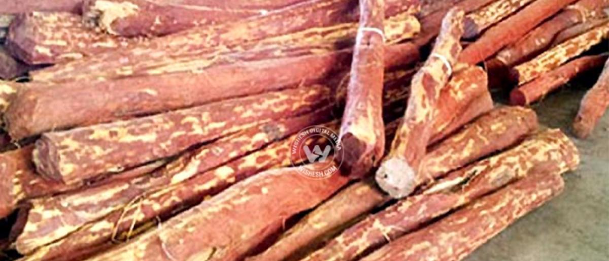 7 red sanders logs seized, 2 held in Tirupati