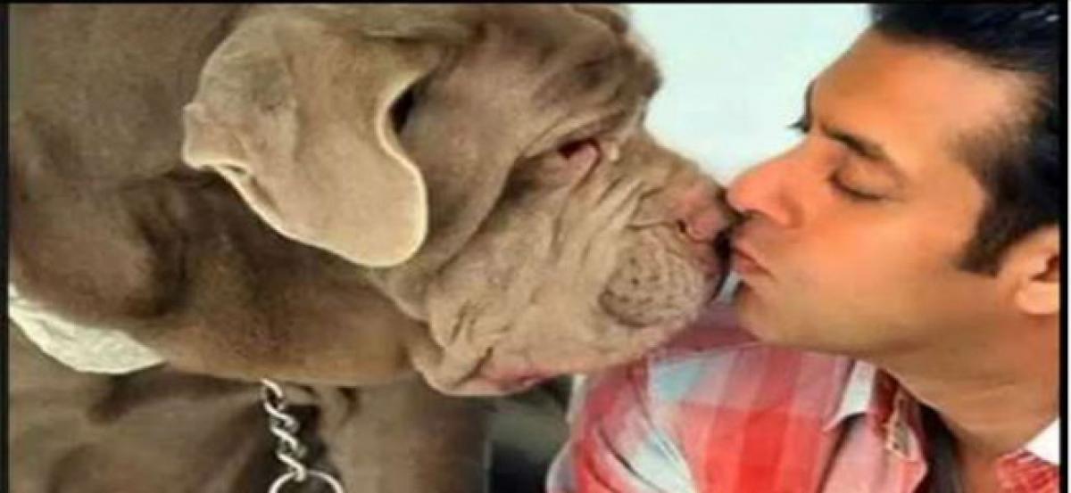 Salman emotional after his dog's death
