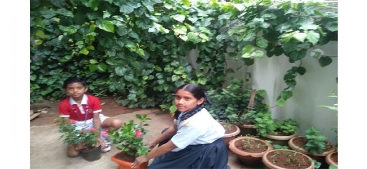 Sister Nivedita School celebrates Van Mahotsav