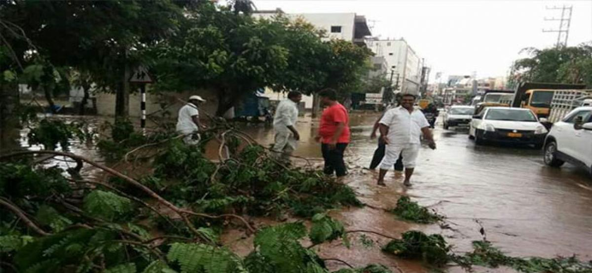 Over 20 trees uprooted in Cherlapally
