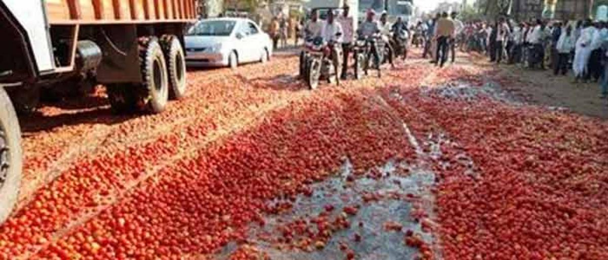 After subabul, depressed tomato farmers demand MSP