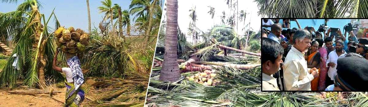 3.32 lakh farmers affected by Titli cyclone