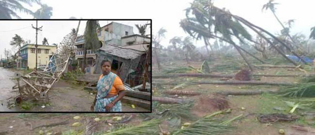 Titli causes severe damage to crops in all 38 mandals
