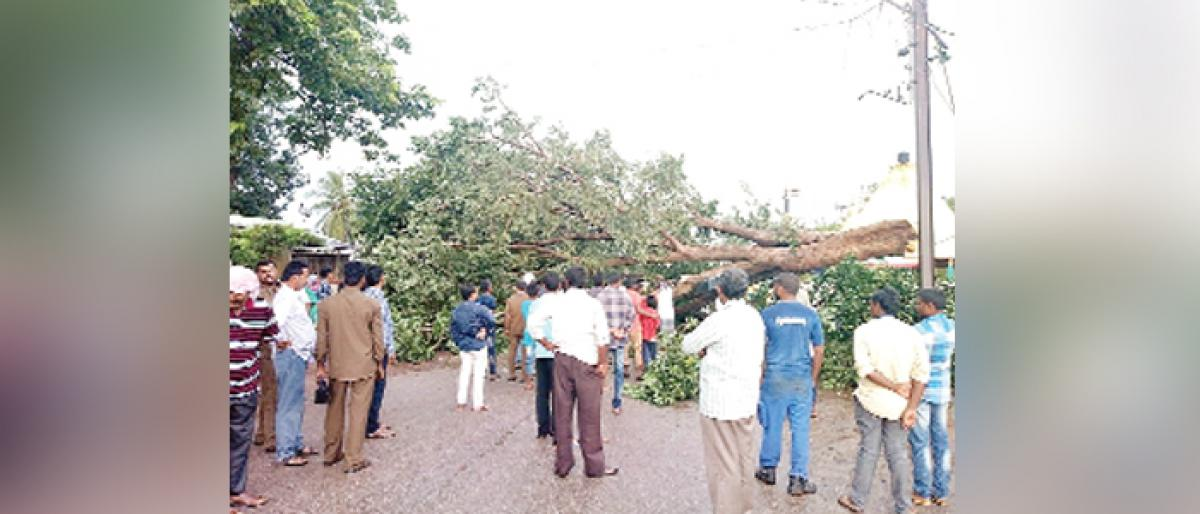 Heavy rains: Uprooted trees block highway