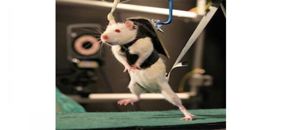 Walking restored in paralysed mice with spinal cord injury