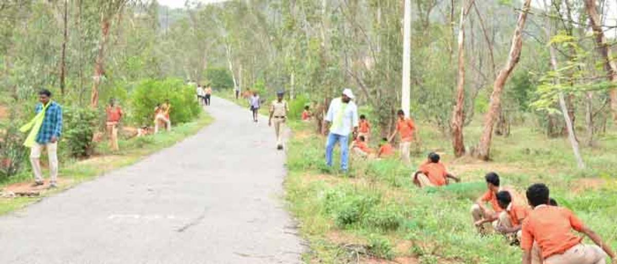 Wanaparthy targets to plant 76 lakh saplings in HH 4th phase