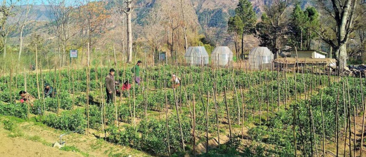 Himachal scaling up farming nature's way