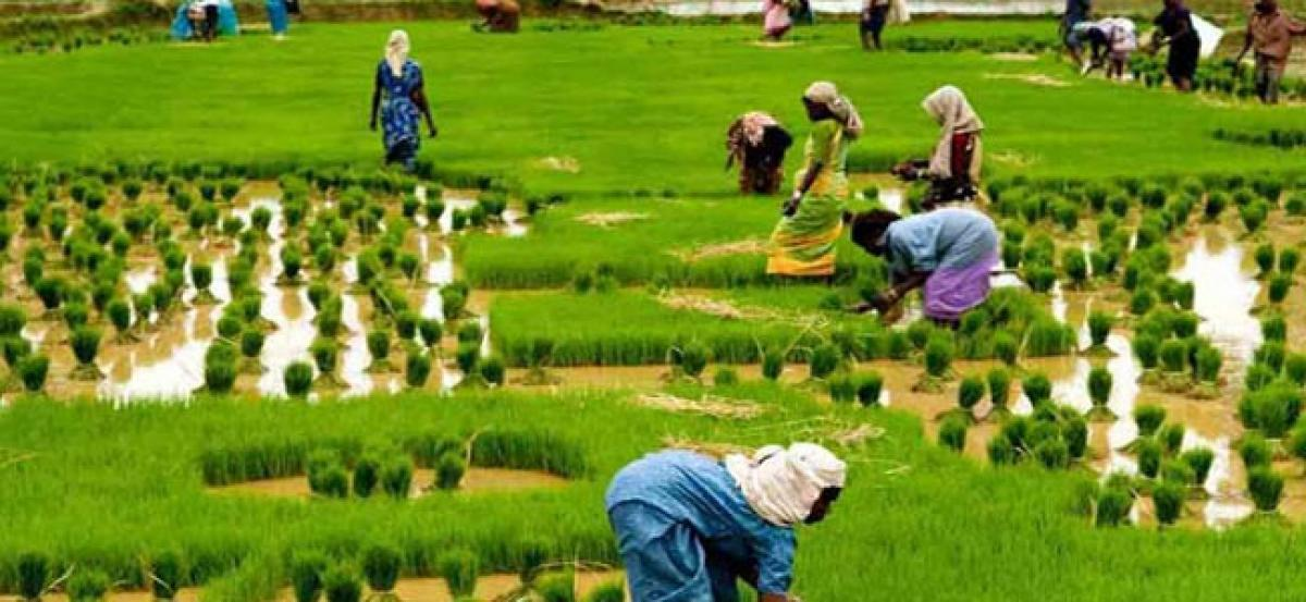 Budget: Govt may hike agri-credit target to Rs 11 lakh crore