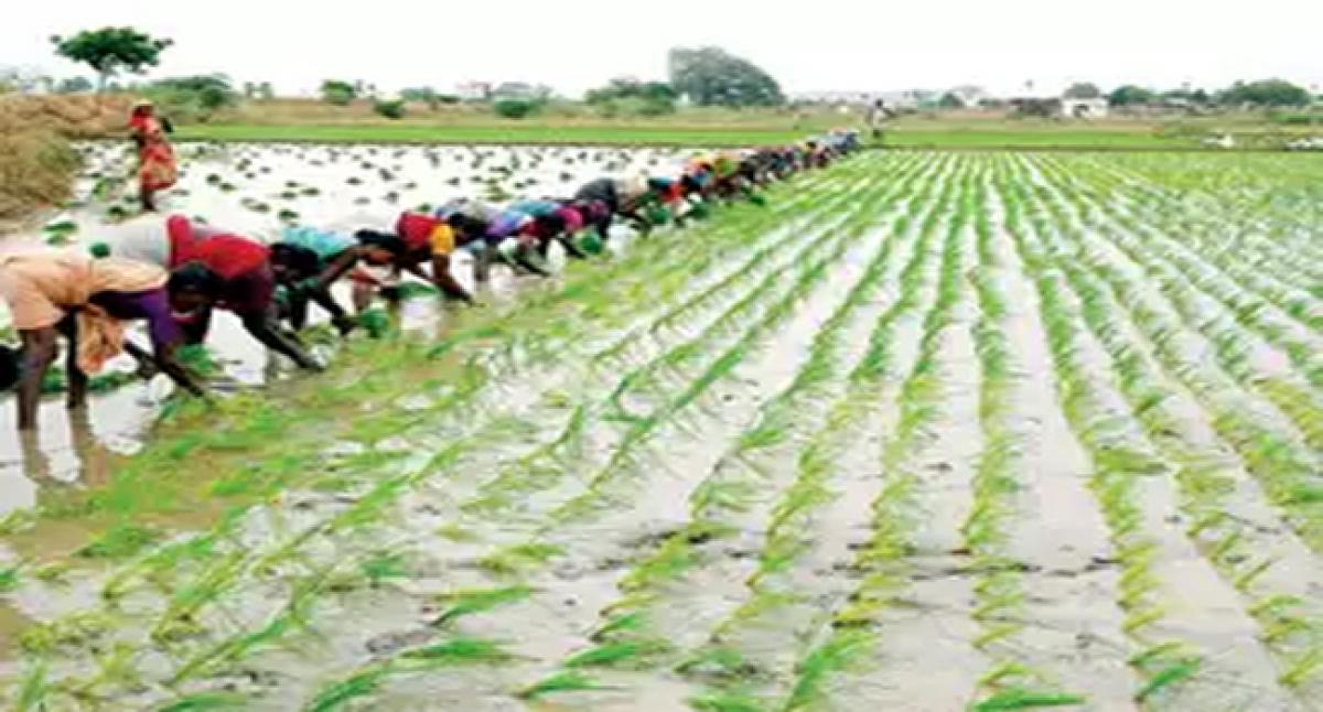 Farmers to wait for seven years for second time subsidy for micro irrigation scheme in Gadwal