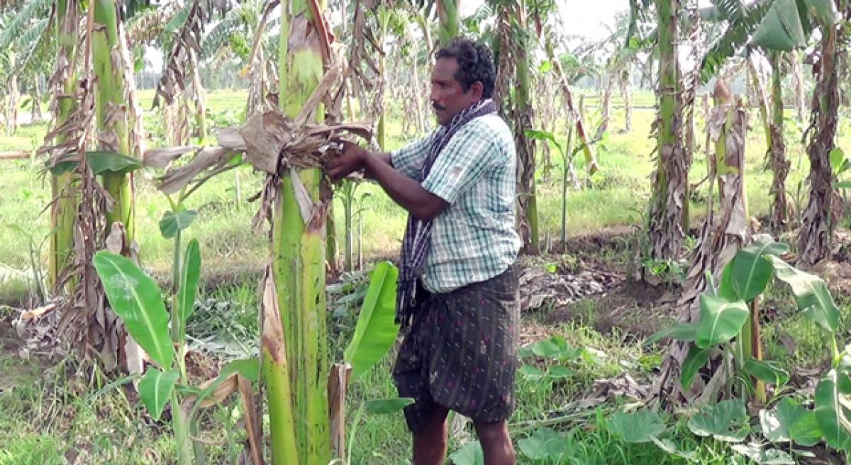 Progressive farmer shows the way