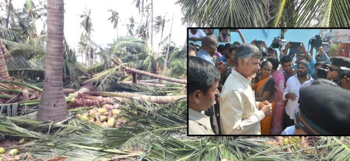Titli hits coconut, cashew farmers hardly - Ten years time required for revival