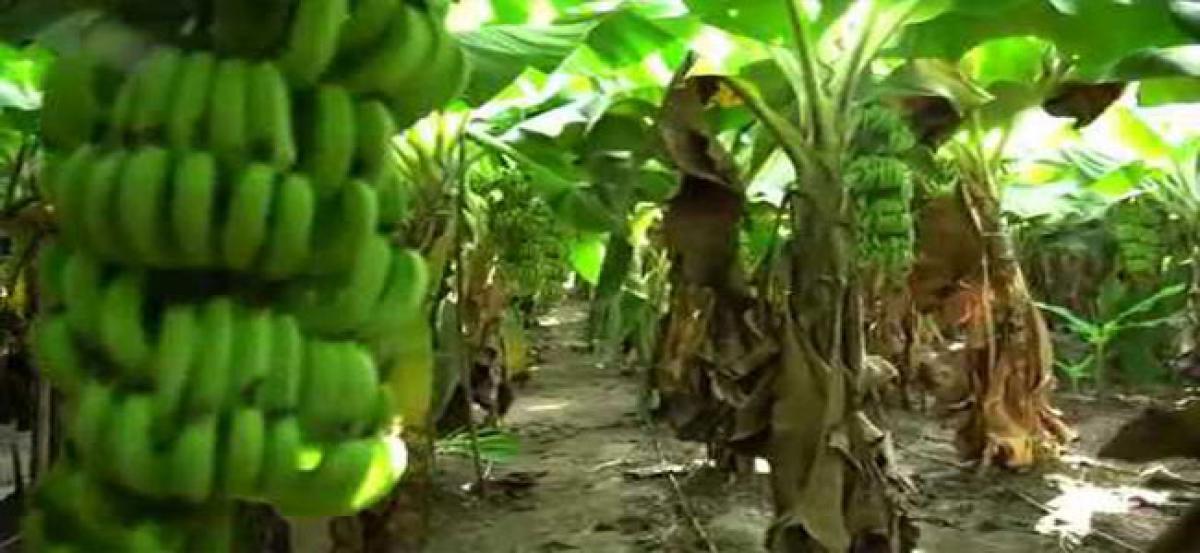 Horticulture hub in Vinukonda soon