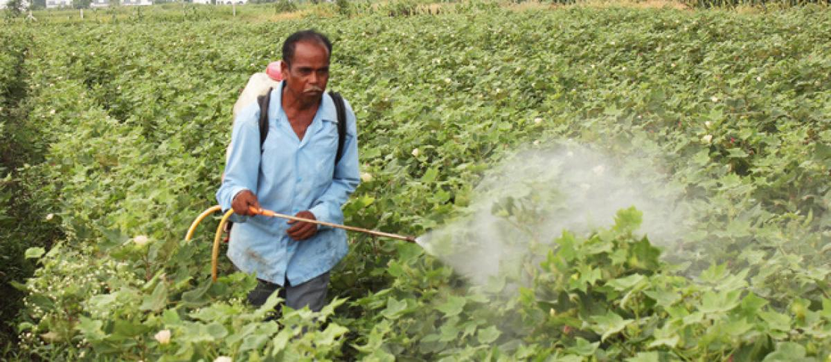 Cotton Corporation of India plans to purchase cotton from Nov 1