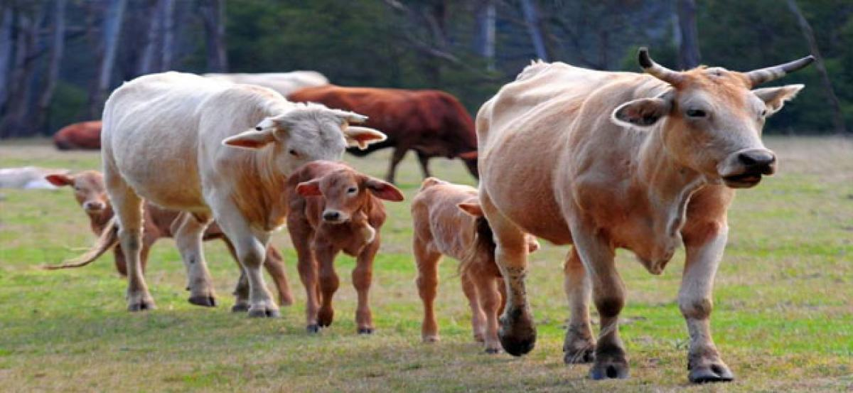 Cattle death toll rises to 26 at Society for the Prevention of Cruelty to Animals