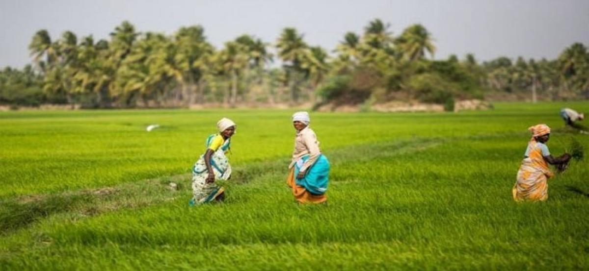 Government mulling Rs 500cr market assurance scheme to help farmers