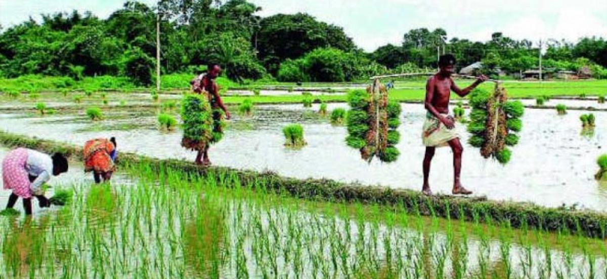 Government engages UNDP to fast-track crop insurance scheme