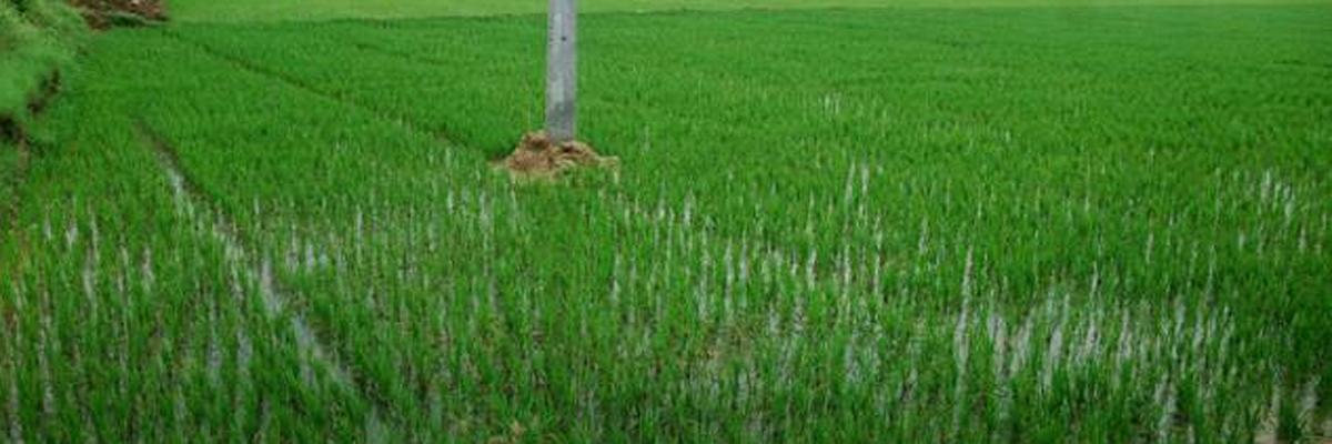 Farmers seek Minimum Support Price, more mandays
