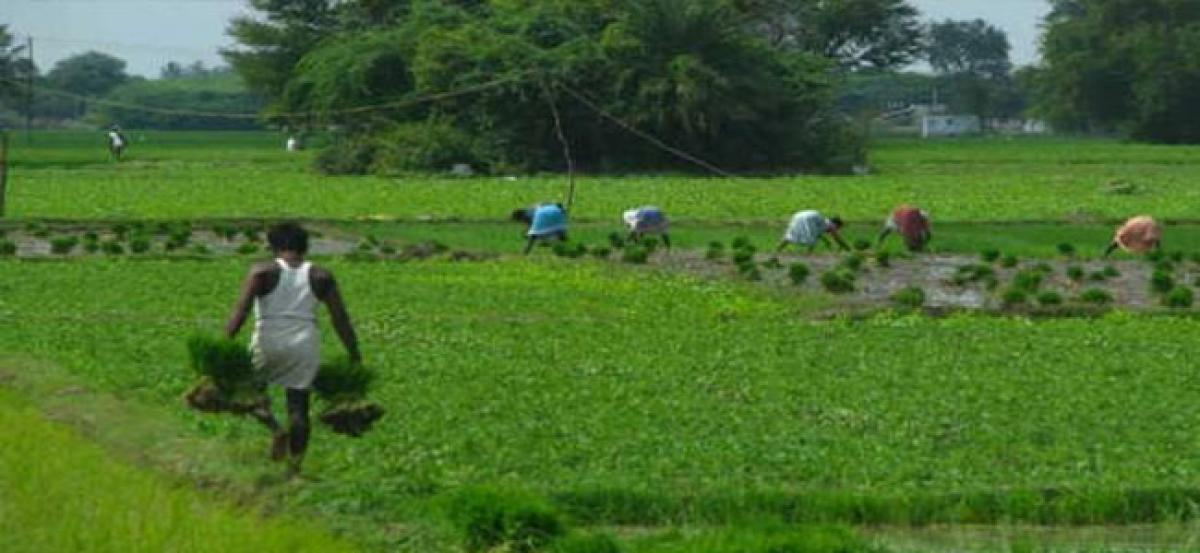Farm sector boost: MSP for kharif crops to be 1.5 times input cost Arun Jaitley says