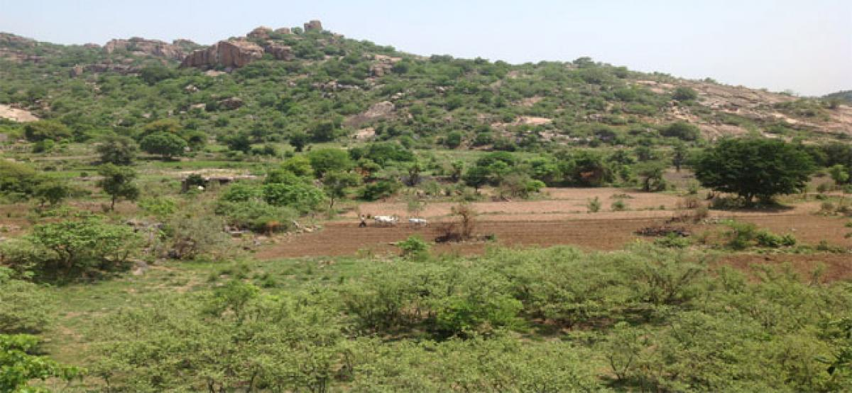Forts to have green cover soon