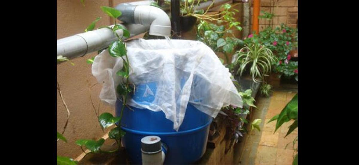 A garden nurtured by rainwater