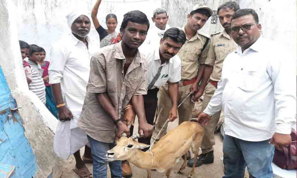 Youth rescue deer from dogs in Kamareddy