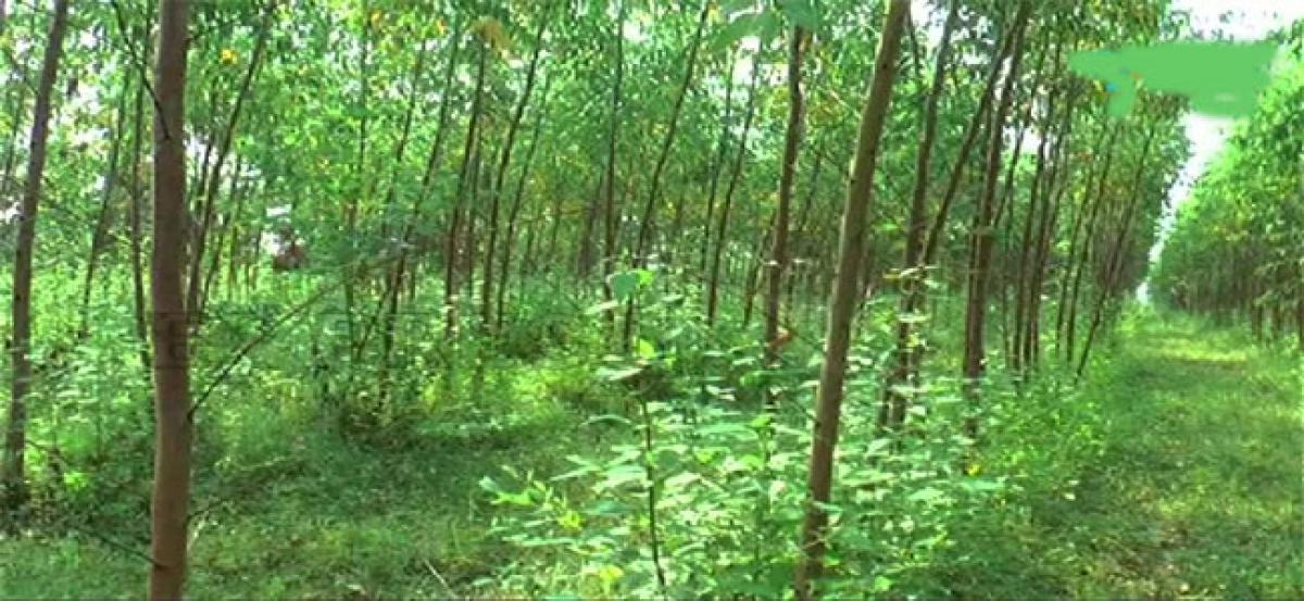 Farmers urge govt for uniform price for Subabul, Jamail