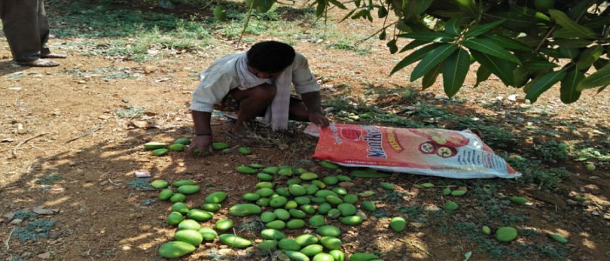 Rains, hailstorm damage crops worth `10 cr