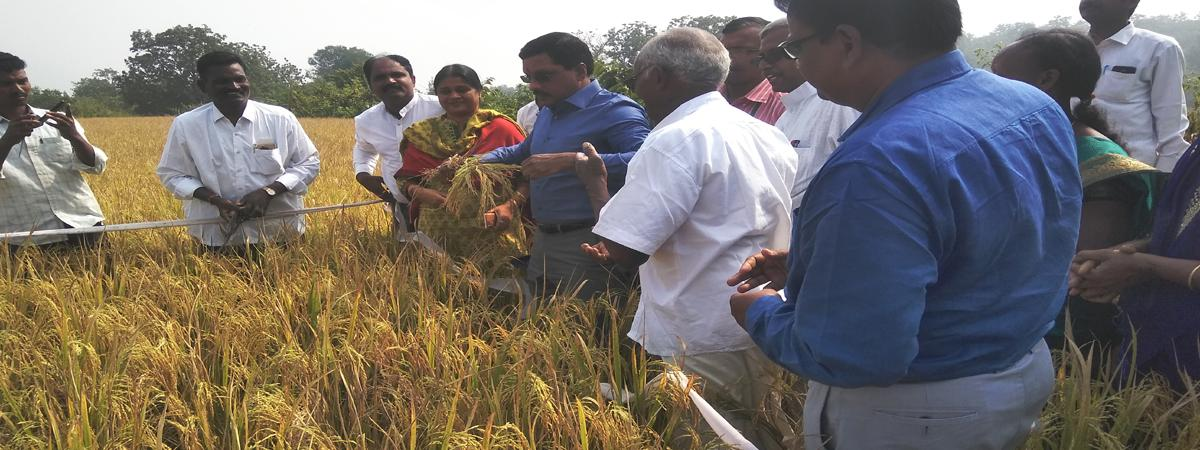 Natural farming makes agriculture debt free