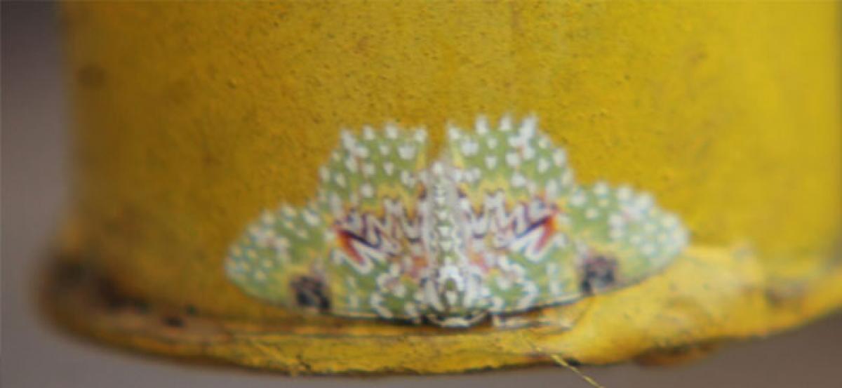 New species of moths found